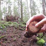 Kienspan suchen und finden – Super Zunder fürs Lagerfeuer