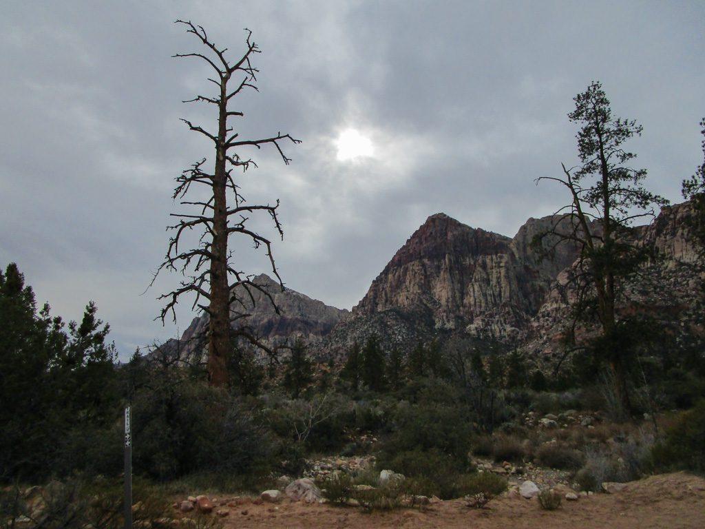 Red_Rock_Canyon-Pine_Creek_Canyon Stimmungsbild