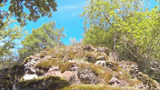 Übernachtung im Wald – Ohne Zelt auf dem Bergkamm